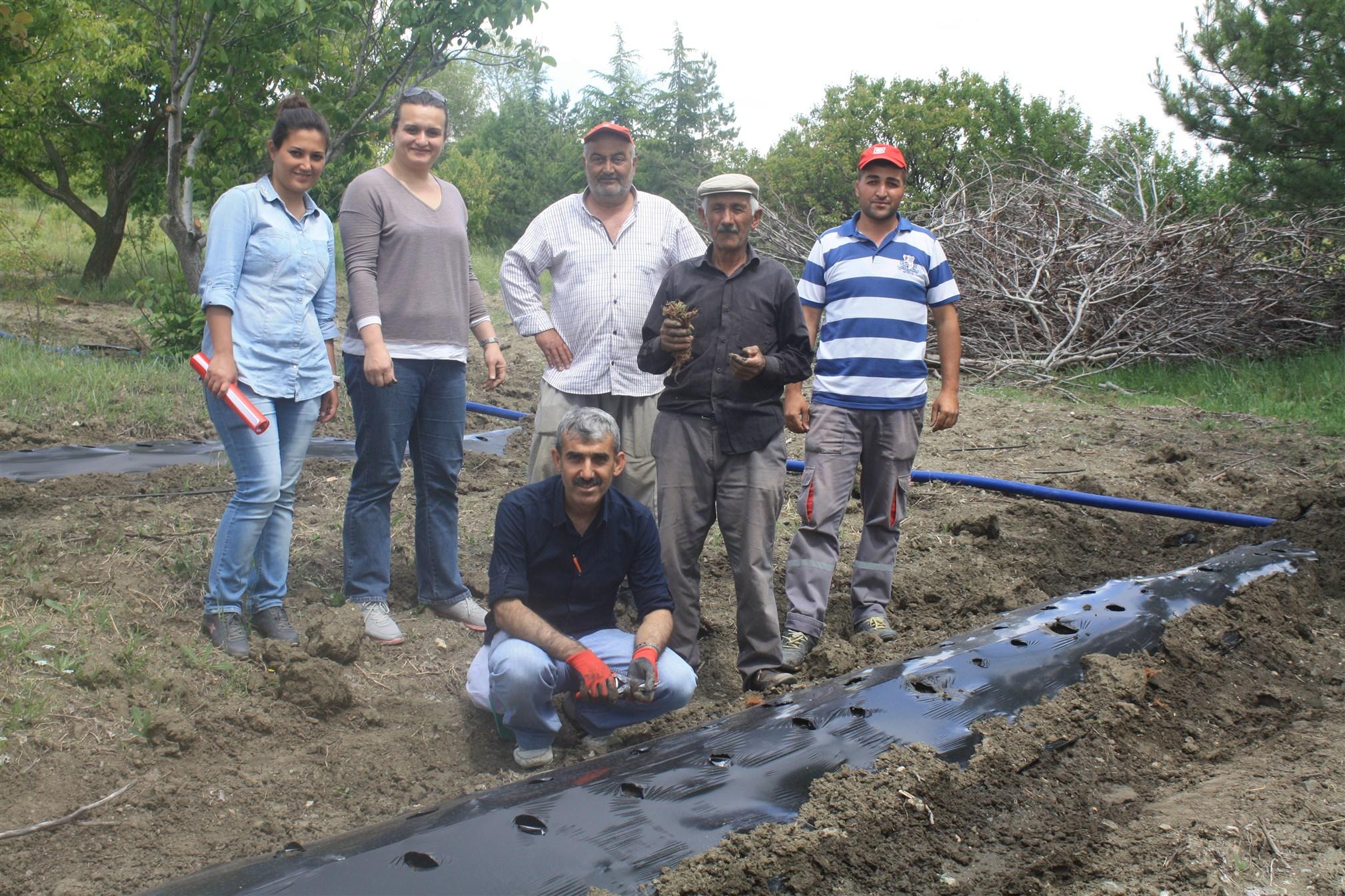 Bozkır'da çilek üretimi