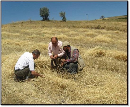 Toprak işlemesiz tarım yaygınlaşıyor