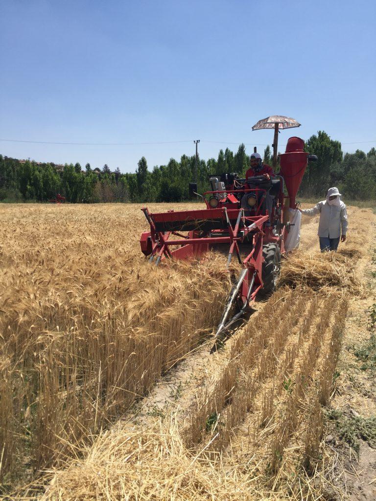 Kayseri Şeker, Coğrafi Şartlara Uygun Buğday Ve Arpa Çeşitlerini Araştırıyor