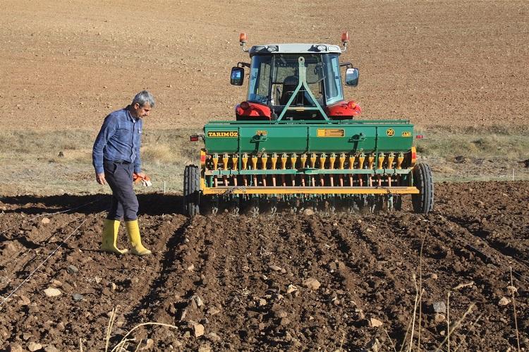 Yerel Buğday Çeşitleri Canlandırılıyor